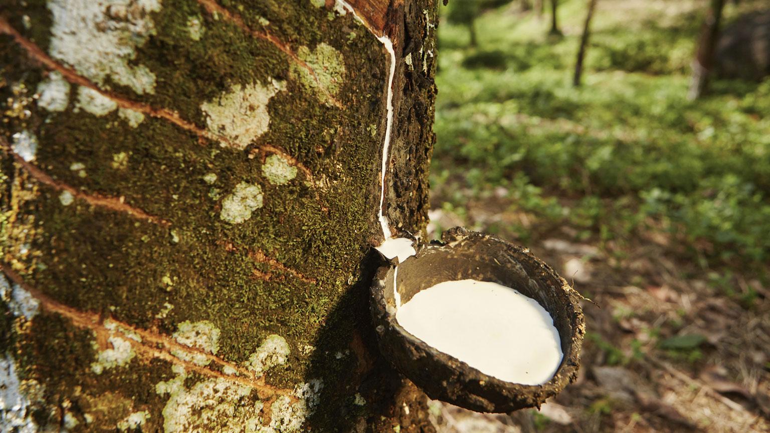 mesoamerican plants  cuisine  and medicine