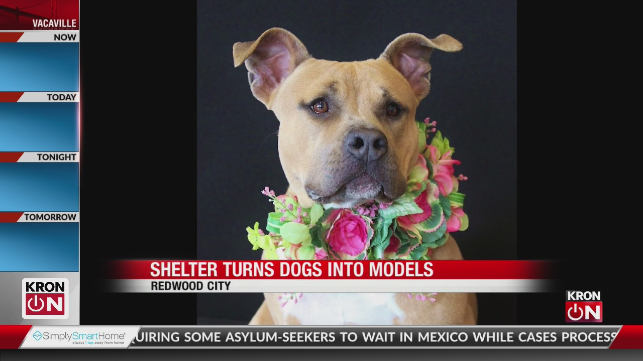 Bay Area shelter turns dogs into models