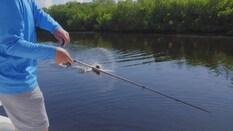 Fishin' Franks