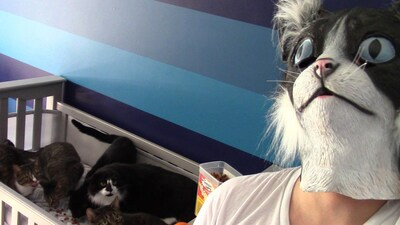 Pranking Cats Is So Easy