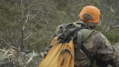 Sambar Stag Wilderness Backpack Hunt Part 2