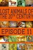 Lost Animals Part 11