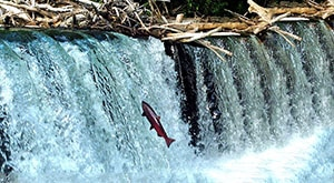 Image of Season 1 Episode 3 Expedition Beluga