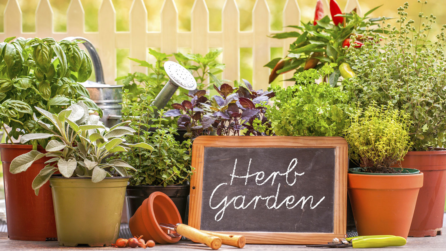 Jump-Start Your Edible Garden