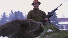 Wild Boar Fever 2 - 2008