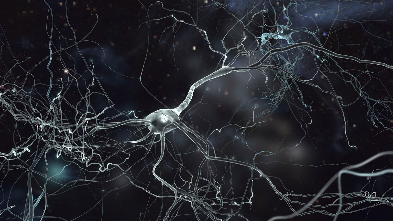 Neuroplasticity—Your Flexible Brain