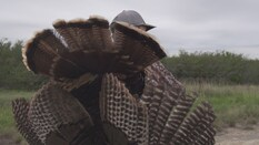 Texas Turkey - 2019