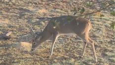 The Morning Buck