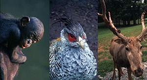 Image of Season 1 Episode 9 Bonobos, Cheer Pheasants, and Pere David's Deer